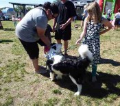 A winning dog Pet Day 2015 opt