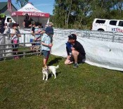 Dog Judging Pet Day 2015 opt
