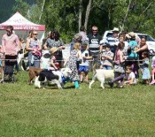 Pet Parade Pet Day 2015 22 opt